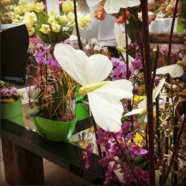 Съемки мастер-класса голландских флористов
